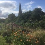 Churchfield Allotments Weybridge