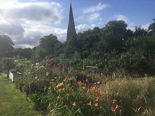 weybridge allotment pic 500 - Churchfield Allotments Weybridge