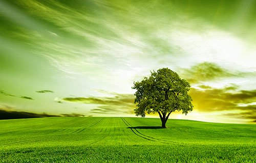 tree field 500 - The Practice - Psychology, Psychotherapy, Psychiatry and Counselling - Guildford, Weybridge, East Molesey